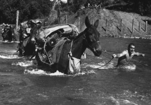 American soldiers cross river with mules